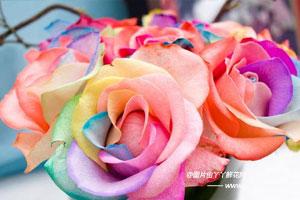 彩虹玫瑰的花语