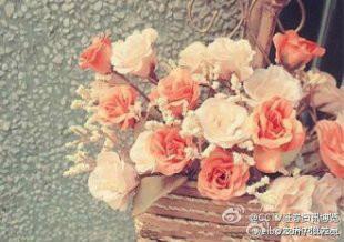 室内常养8种鲜花容易引起疾病