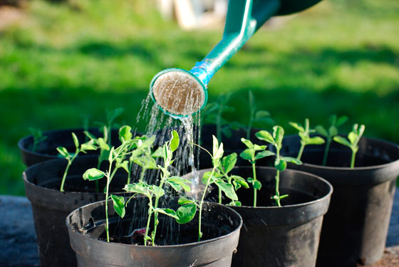 这个夏天,你的花草浇对水了吗?