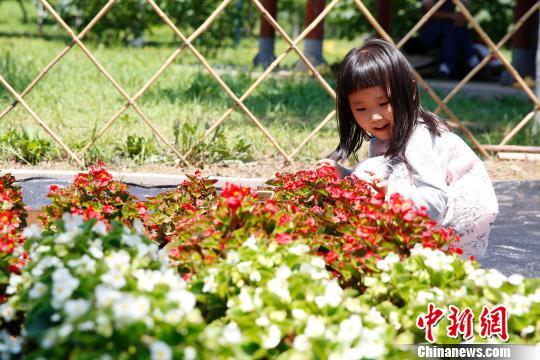 800多种世园花绽放京城 提前看2019北京世园会