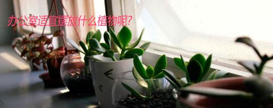 办公室适宜摆放什么植物呢?