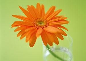 雏菊花语是什么意思 寓意图片
