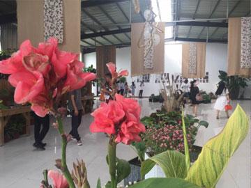 郑州今夏花卉展 50万盆花卉免费等你来