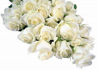 【白色花束】-把我的一切都奉献给你