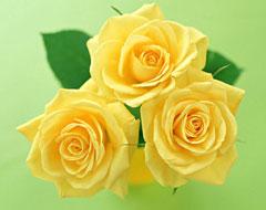 黄玫瑰的花语