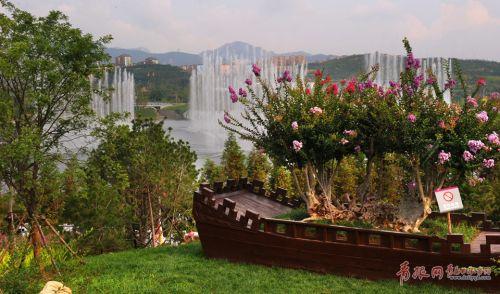 美呆了!青岛紫薇花期已至赏花地点公布