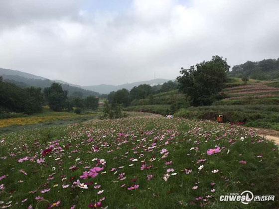 铜川宜君花溪谷开园 700余亩鲜花等你来看