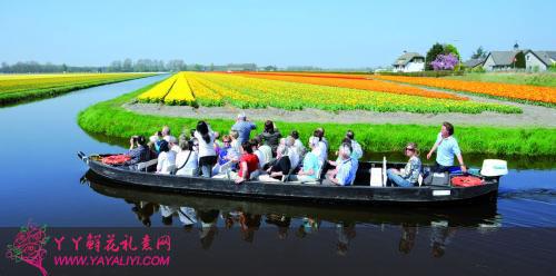 荷兰欣赏郁金香的游客