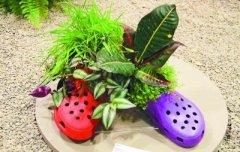加拿大花卉与园艺展:种在鞋子里的鲜花