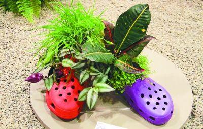 种在一双鞋子里的鲜花