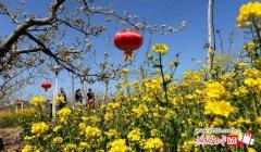 石家庄周边鲜花盛开