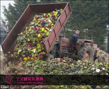 英国天气寒冷花卉滞销 种植商损失达5千万英镑