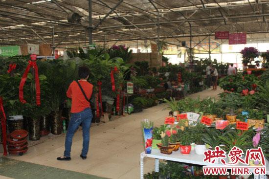 陈寨花卉市场鲜花、盆景销售平淡