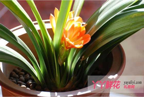 夏季花卉的养护