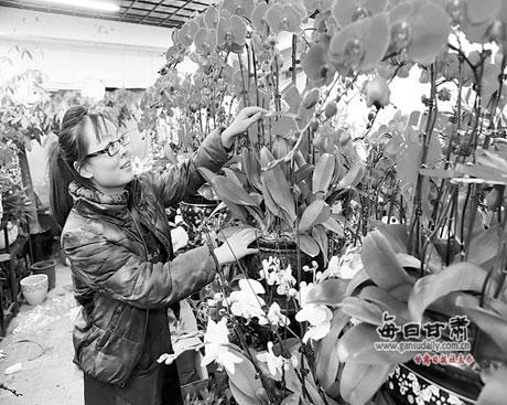 市民在选购鲜花