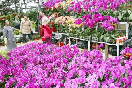 在乌鲁木齐明珠花卉市场内市民正在选购花卉