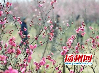 3月份60多种鲜花盛开
