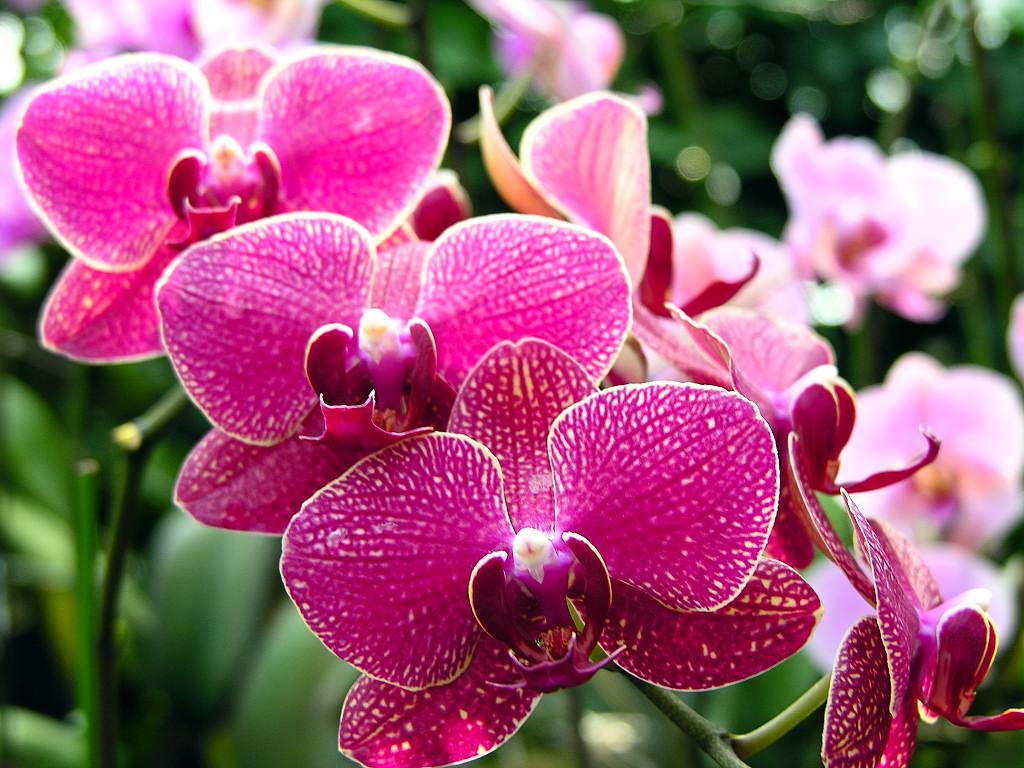 3500盆兰花将于4月亮相郑州绿博园