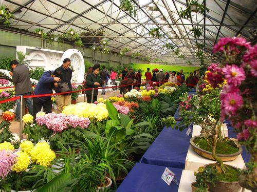 文明祭祀催热鲜花销售 西安菊花价格涨至每枝3元