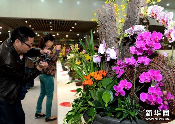 第24届中国(郑州)兰花博览会开幕