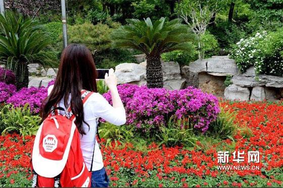 济南趵突泉公园鲜花美景引游人