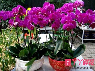 陕西:延安小伙安康种花卉 网上卖花年收入10万