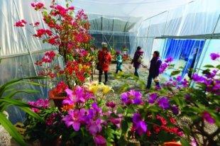 南京:莫愁湖公园举办寒冬鲜花展