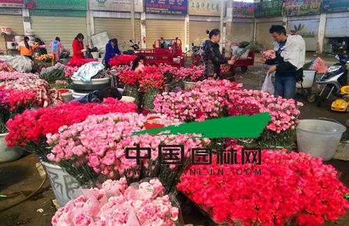 昆明:斗南花市鲜花价格大幅回落