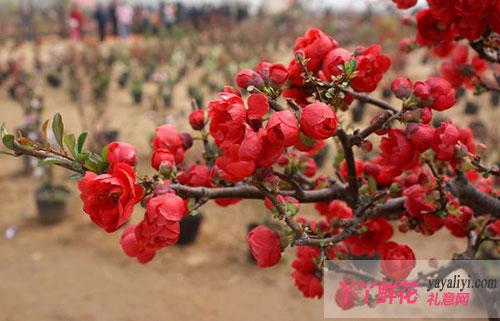 杭州:年宵花陆续上市 花卉店老板高兴不起来