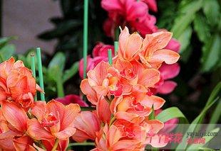 杭州:年宵花展周末开张 凤起花鸟城满100送鲜花