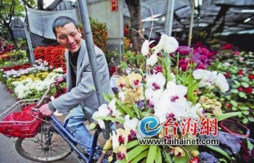 鲜花销量价格齐降 厦门花卉市场节前旺季不旺