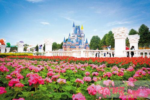 """广州""""三八""""出游,到百万葵园看鲜花展"""