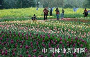 郑州郁金香花展呈现美好春光