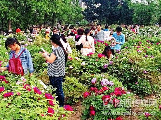 西安兴庆宫公园鲜花盛开 吸引大批游人参观