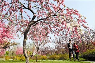 天津:泰达园林植物资源库百余种花卉等你赏