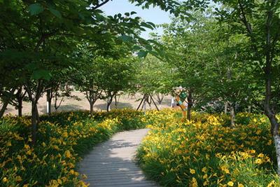 上海:宿根花卉点缀宝山滨江公园