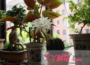室内养花巧用光