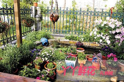 庭院葡萄修剪图解
