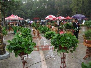 湖南省:娄底市首届室内花卉巡回展第三站将在石马公园开展