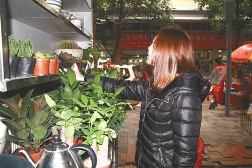 重庆:万盛经开区多肉植物行情走跌