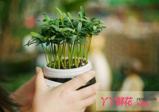 新买花卉三养护