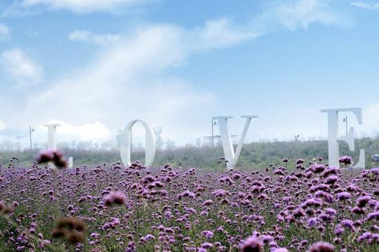 郑州首届虞美人花节在普兰斯薰衣草庄园开幕