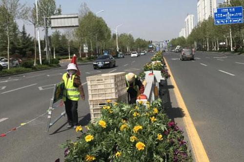淄博中心城区部分主干道开始栽植鲜花