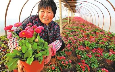 """河南开封:""""鲜花产业""""别样红 带动农民增收"""