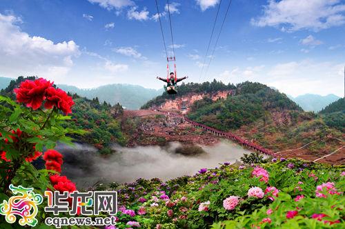 垫江牡丹文化节本月25日开幕 月底迎来鲜花盛花期