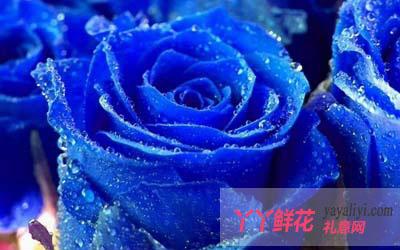 <b>天蝎座女生的专属花</b>