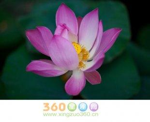 莲花的花语及象征意义