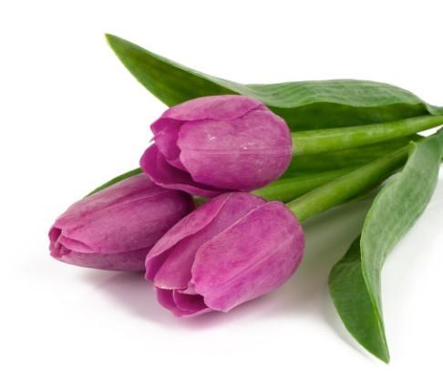 四月的花语是什么?