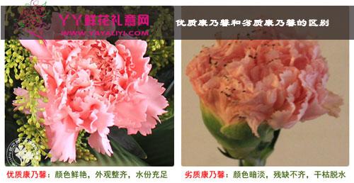 优质康乃馨与劣质康乃馨对比图