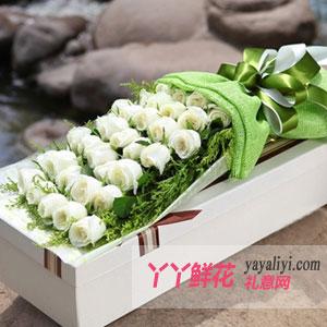 送花33朵白玫瑰方形礼盒